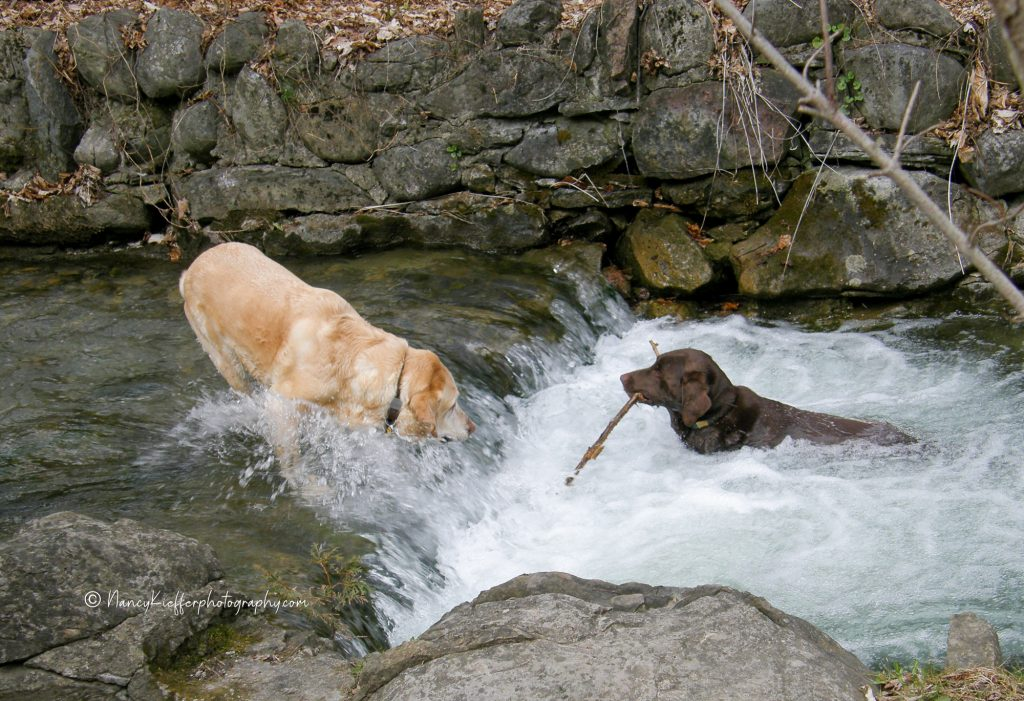 water play and dogs
