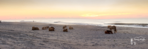 assateague dawn