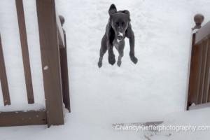 declan jump dog