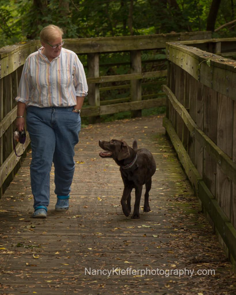 dog, labrador, walk