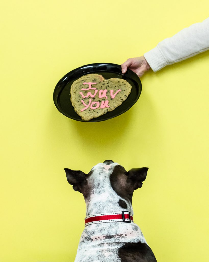 rescue dog looking at a cookie