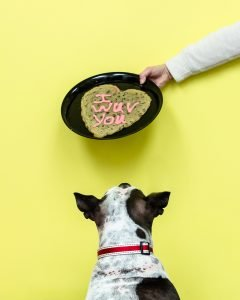 animal love and cookie heart
