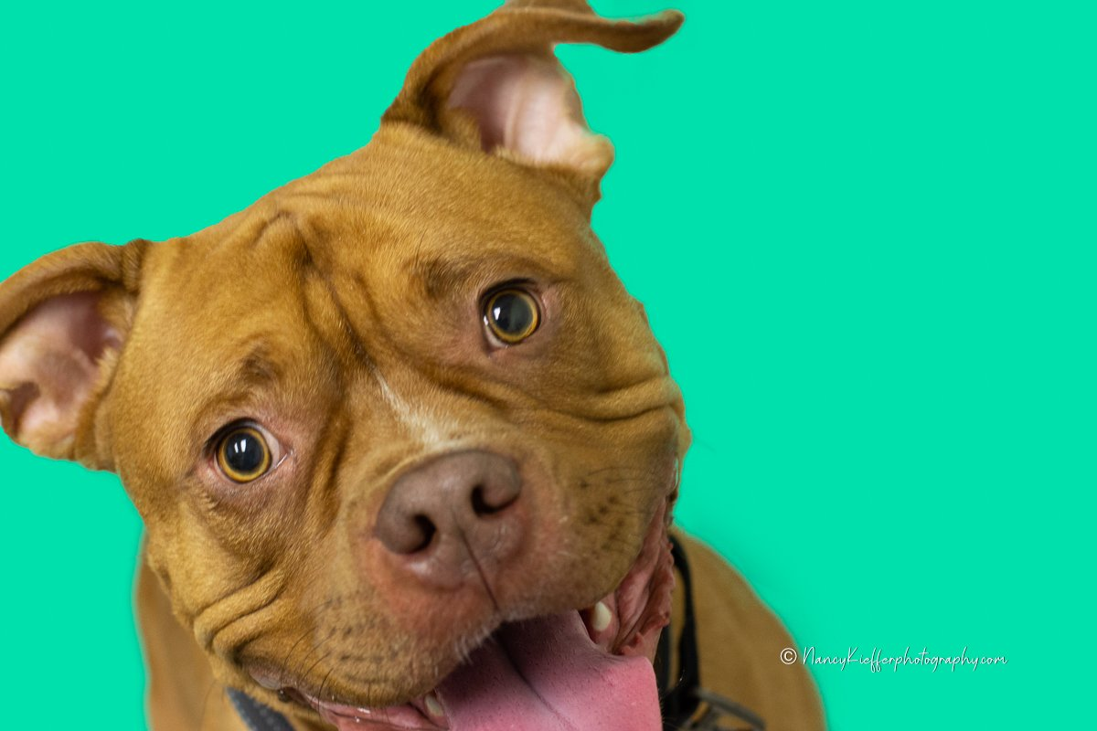 colorful, redford, dog rescue