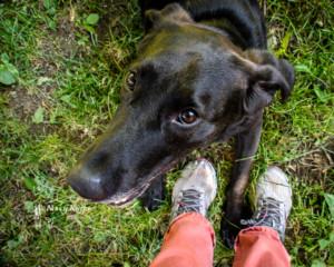 dog, feet, selfie