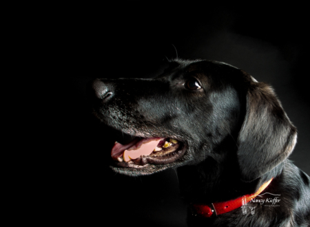 low key dog image