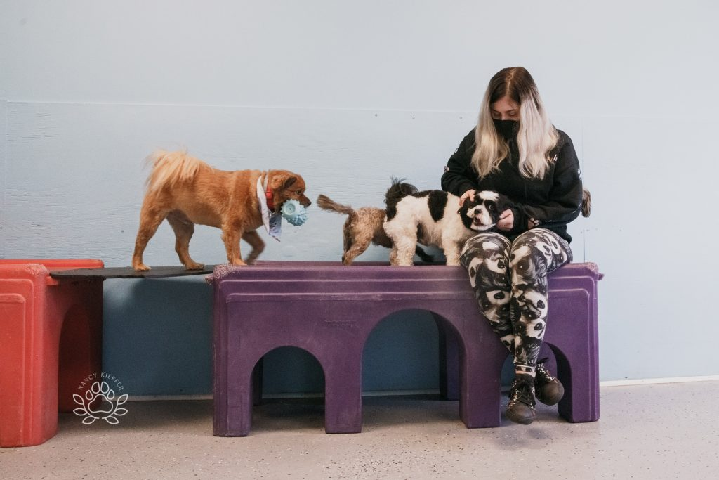 doggie day care at pampered pups and wiggle butts