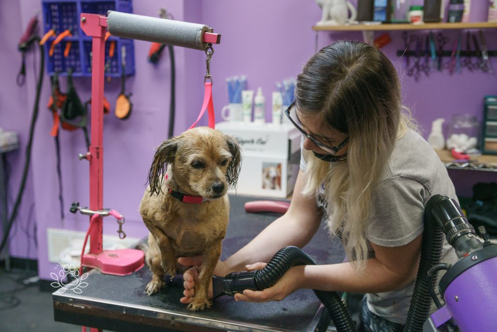 Rascal getting a blow dry