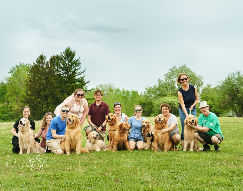 goldens from same breeder for playdate at Jamesville beach dog area