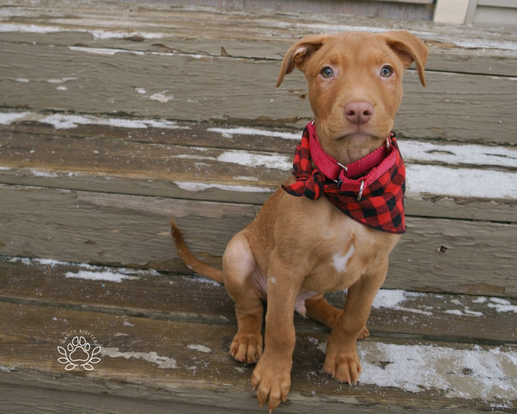 Ollie the puppy