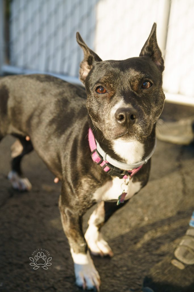 Nyla is up for adoption