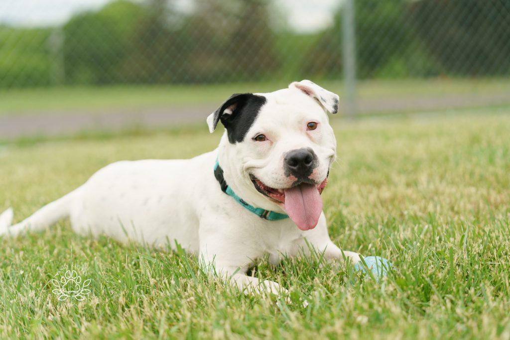 Aspen the rescue dog
