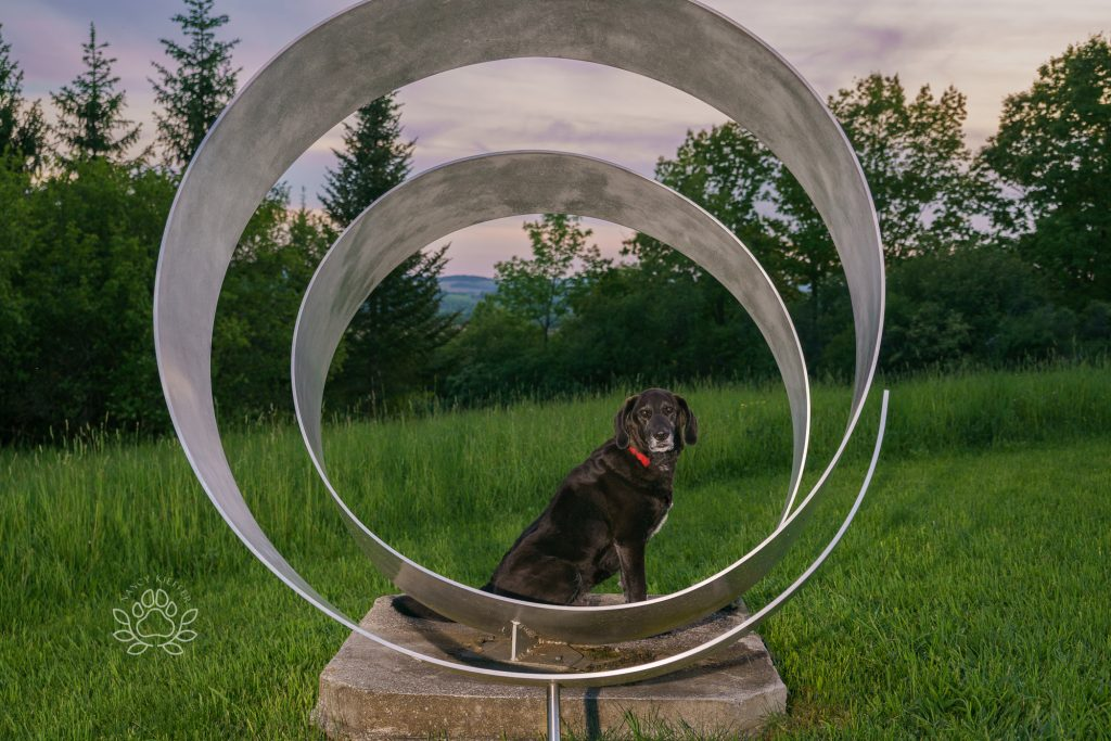Dog and sunset at stone quarry art Park