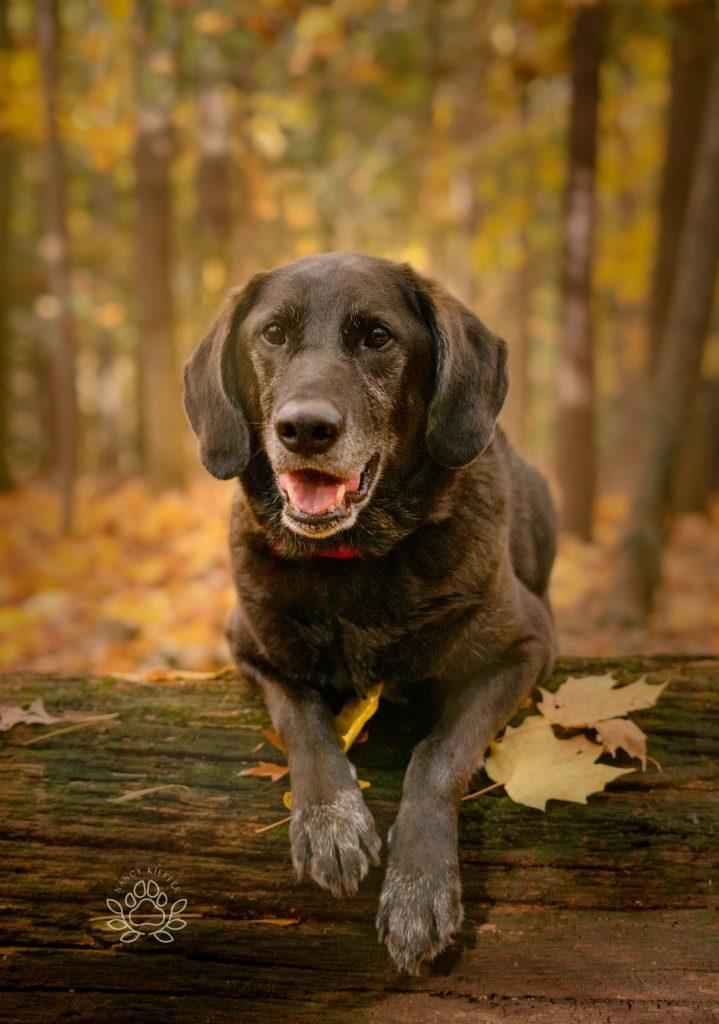 Black dog ready for adventure