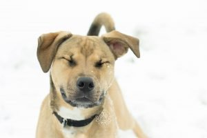 Dog with eyes closed