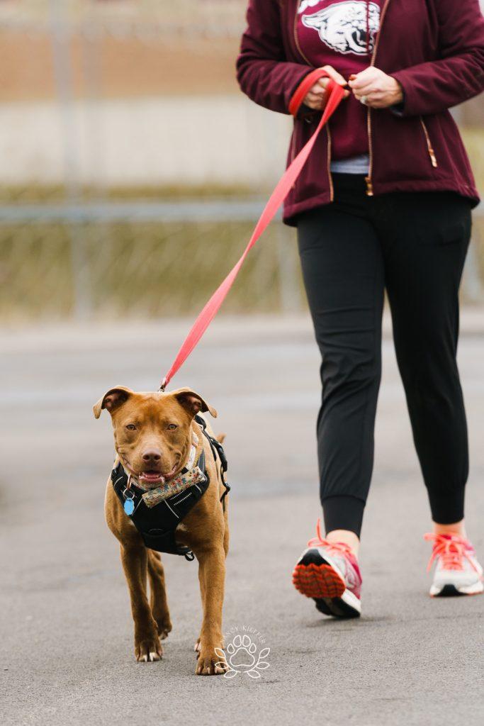 Walking with koko the dog