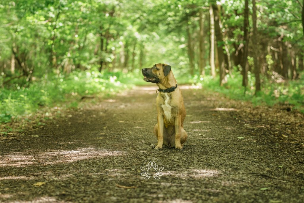 Mia the dog in the woods