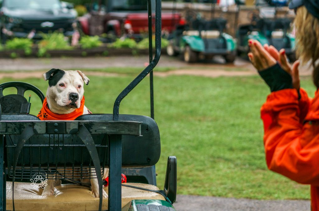 dog checking out the golf cart