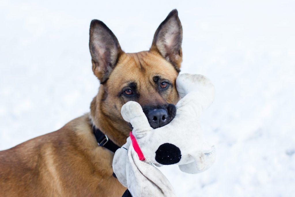 dog with stuffed animal