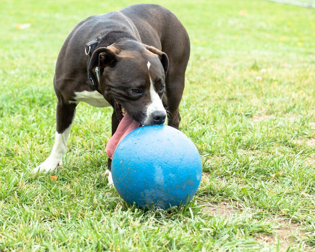 dog with long tongue