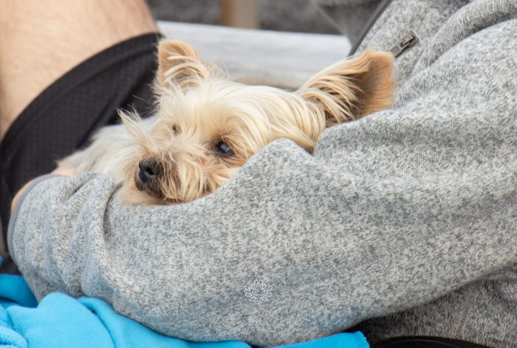dog nestled in owners arms