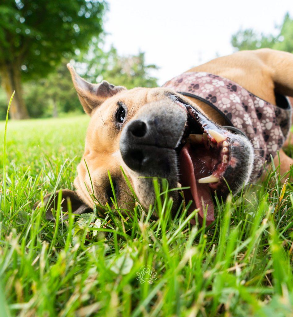 dog loving the grass