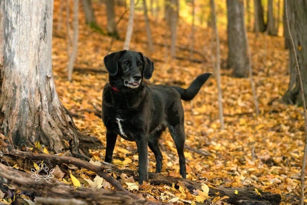 ever vigilant black dog