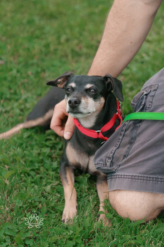 Yogi- dog up for adoption