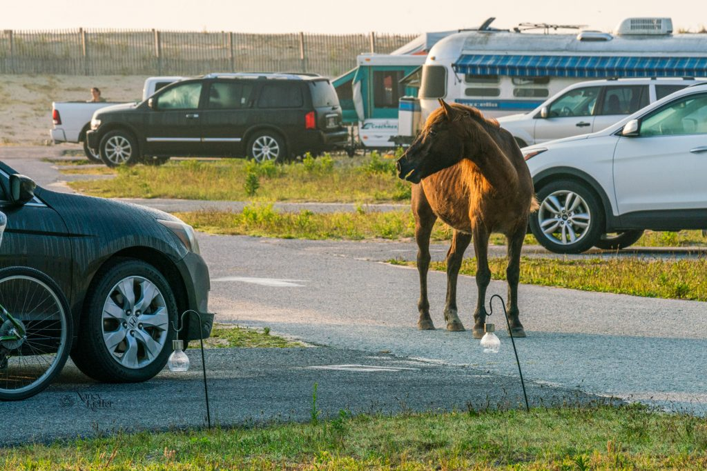 horse and campers