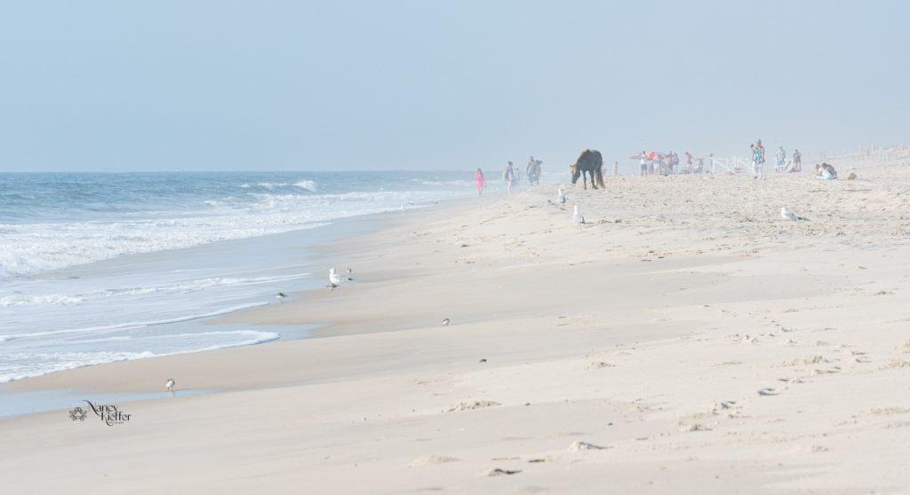 a horse strolling the beach