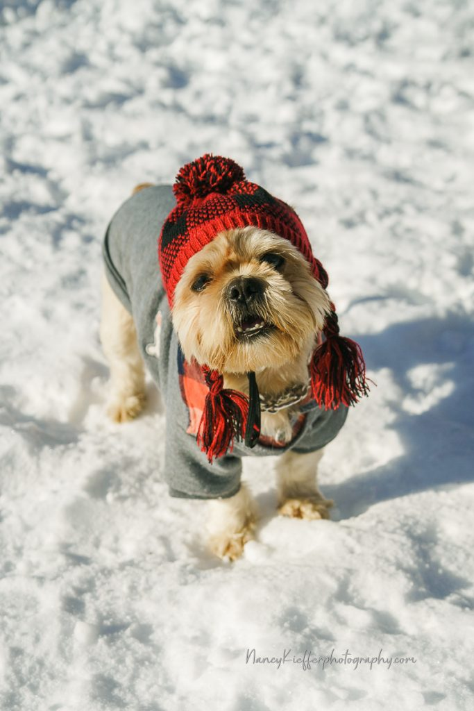 Louie the dog all dressed up for winter