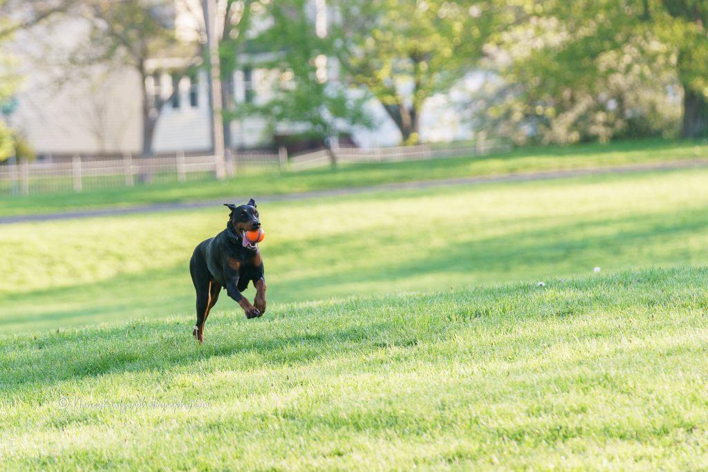 Vera at play