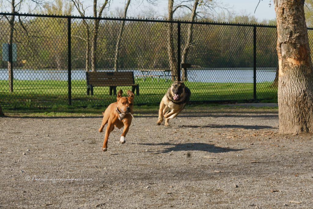 Dogs at wegmans good dog park