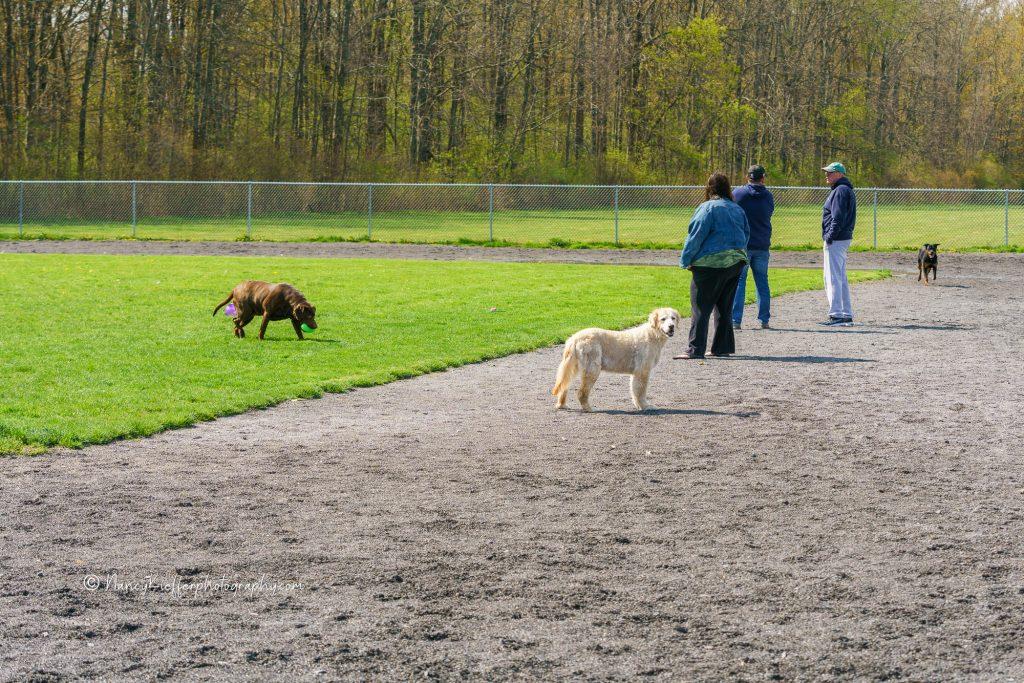 the dog playground