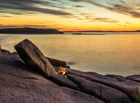 rescue dog, golden hour