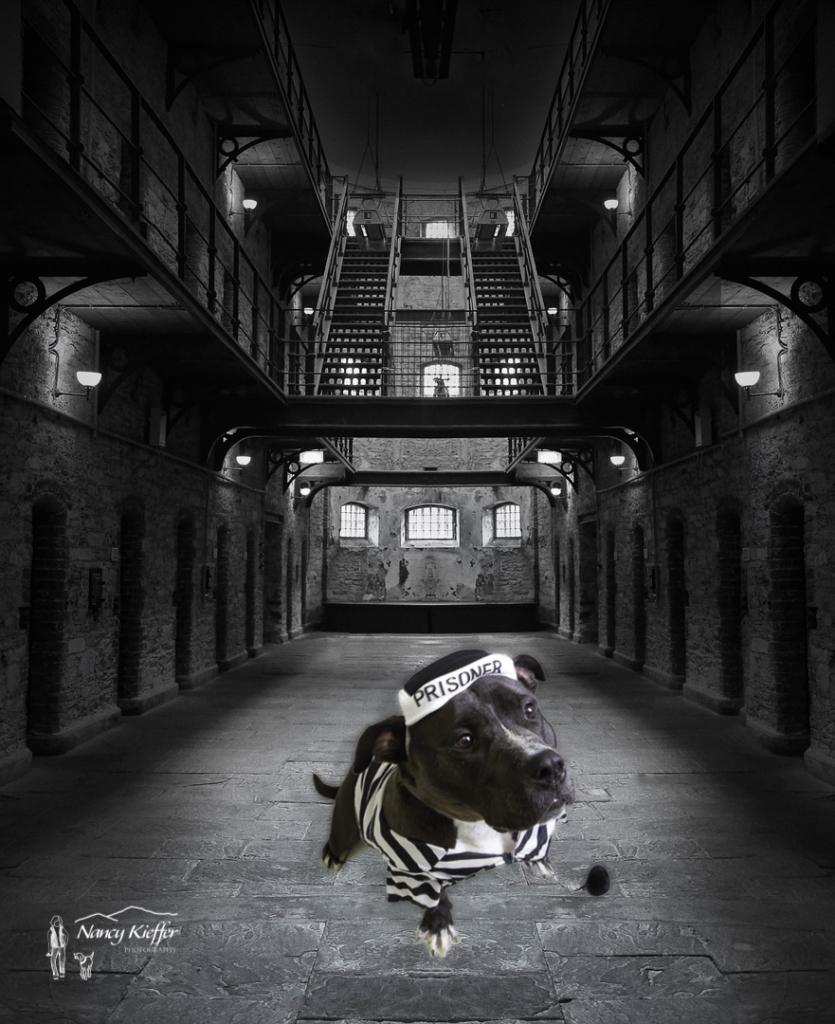 Bear in prison