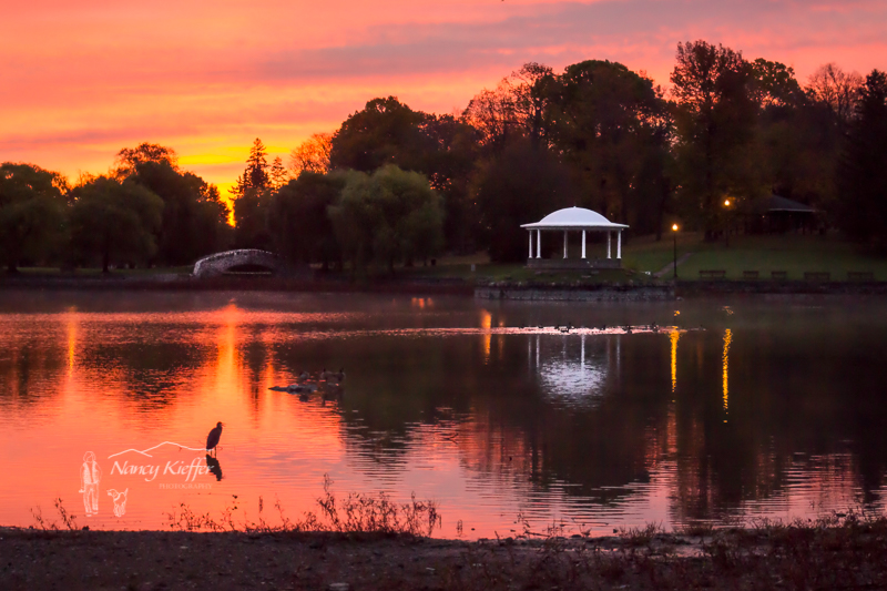 Rosy Dawn with Heron